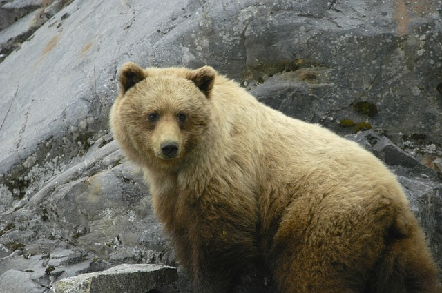 Glacier Bay Wildlife | Alaskan Cruise