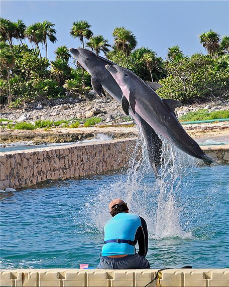 dolphin discovery3