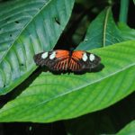 Butterfly Sanctuary | Key West Attractions